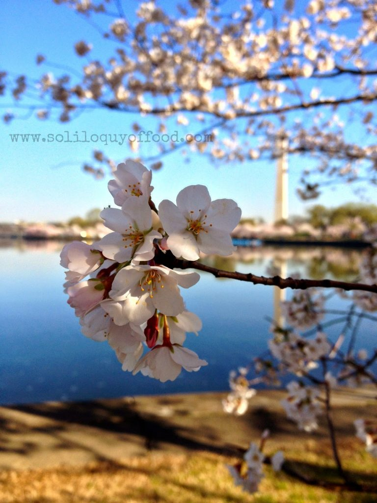 Chaos On Wheels - Cherry Blossoms 2014 - www.soliloquyoffood.com