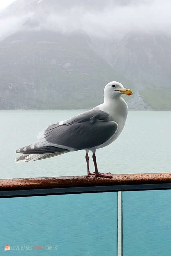 Alaska Seagull